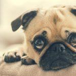 Pet sozinho em casa não precisa ser sinônimo de destruição!