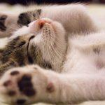 Chega de olheiras! Saiba o que fazer quando seu gato não te deixa dormir
