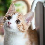 Gato: quantos anos vive um gato?